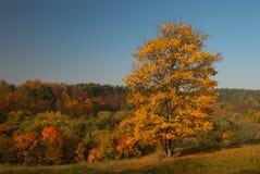 Paisaje del otoño con el árbol amarillo Imagenes de archivo