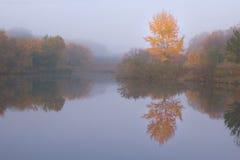 Paisaje del otoño con el árbol amarillo Imagen de archivo