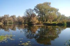Paisaje del otoño con el árbol amarillo en la costa del río Foto de archivo libre de regalías