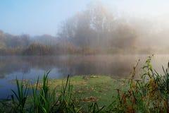 Paisaje del otoño con el árbol amarillo en la costa del río Fotografía de archivo