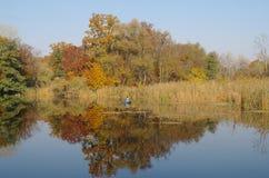 Paisaje del otoño con el árbol amarillo en la costa del río Fotografía de archivo libre de regalías