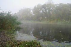 Paisaje del otoño con el árbol amarillo en la costa del río Imágenes de archivo libres de regalías