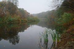 Paisaje del otoño con el árbol amarillo en la costa del río Imagenes de archivo