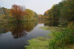 Paisaje del otoño con el árbol amarillo en la costa del río Imagen de archivo