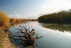 Paisaje del otoño con el árbol caido seco Fotos de archivo libres de regalías