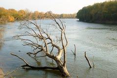 Paisaje del otoño con el árbol caido seco Fotos de archivo