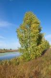 Paisaje del otoño con el árbol de abedul por el río en un día soleado Imagen de archivo libre de regalías