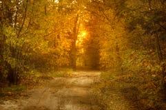 Paisaje del otoño con el árbol en luz del sol Foto de archivo libre de regalías