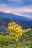 Paisaje del otoño con el árbol hermoso en las montañas Imagen de archivo libre de regalías
