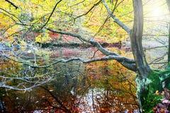 Paisaje del otoño con el árbol que refleja en agua Fotos de archivo libres de regalías
