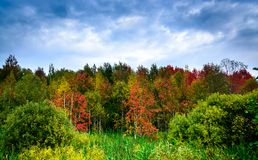 Paisaje del otoño con el bosque colorido Fotos de archivo