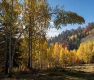 Paisaje del otoño con el bosque de hojas caducas en las montañas Fotos de archivo libres de regalías