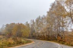 Paisaje del otoño con el camino y las hojas amarillas del abedul, montaña de Vitosha, Bulgaria Fotografía de archivo libre de regalías