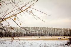 Paisaje del otoño con el campo nevado con los rollos del heno Imágenes de archivo libres de regalías