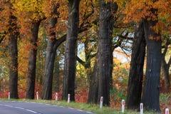 Paisaje del otoño con la carretera rural Foto de archivo