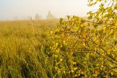 Paisaje del otoño con la hierba amarilla en el campo, el abedul y el humo Foto de archivo