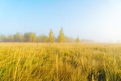 Paisaje del otoño con la hierba amarilla en el campo, el abedul y el humo Foto de archivo libre de regalías