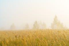 Paisaje del otoño con la hierba amarilla en el campo, el abedul y el humo Fotografía de archivo