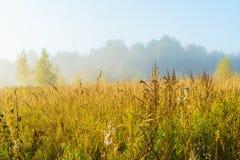 Paisaje del otoño con la hierba amarilla en el campo, el abedul y el humo Fotos de archivo libres de regalías