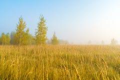 Paisaje del otoño con la hierba amarilla en el campo, el abedul y el humo Imagen de archivo libre de regalías