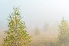 Paisaje del otoño con la hierba amarilla en el campo, el abedul y el humo Fotografía de archivo libre de regalías