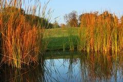 Paisaje del otoño con la juncia Fotos de archivo