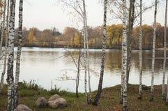 Paisaje del otoño con la reflexión de los árboles de abedul en el agua del río Imágenes de archivo libres de regalías