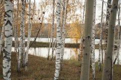 Paisaje del otoño con la reflexión de los árboles de abedul en el agua del río Imagen de archivo