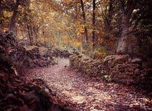 Paisaje del otoño con las hojas y la piedra caidas Foto de archivo libre de regalías