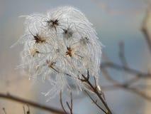 Paisaje del otoño con las semillas mullido Fotografía de archivo libre de regalías