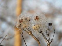 Paisaje del otoño con las semillas mullido Imagen de archivo libre de regalías