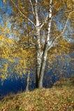 Paisaje del otoño con los árboles del río y de abedul Imagen de archivo