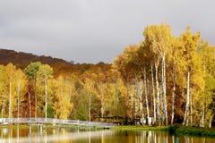 Paisaje del otoño con los árboles en la salida del sol Imágenes de archivo libres de regalías