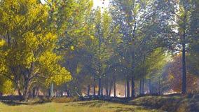 Paisaje del otoño con los árboles escénicos en el borde del bosque ilustración del vector