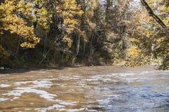 Paisaje del otoño con los árboles y el río coloridos en luz del sol Fotos de archivo