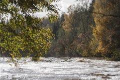 Paisaje del otoño con los árboles y los rápidos coloridos del río en luz del sol Foto de archivo libre de regalías