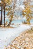 Paisaje del otoño con los abedules amarillos y la nieve Siberia, los coas Fotos de archivo libres de regalías