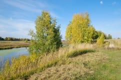 Paisaje del otoño con los abedules por el río Imagenes de archivo