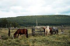 Paisaje del otoño con los caballos Fotos de archivo