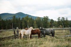 Paisaje del otoño con los caballos Imagen de archivo libre de regalías