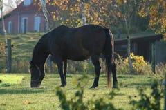 Paisaje del otoño con los caballos imagen de archivo
