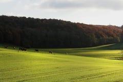 Paisaje del otoño con los caballos fotografía de archivo