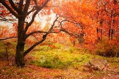 Paisaje del otoño con los robles cerca de The Creek Fotografía de archivo libre de regalías