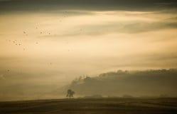 Paisaje del otoño con niebla, el árbol y los pájaros Imagen de archivo libre de regalías