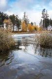Paisaje del otoño con un bastón en la costa del río Obi en el Sib Imagen de archivo libre de regalías