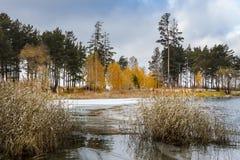 Paisaje del otoño con un bastón en la costa del río Obi en el Sib Imagen de archivo