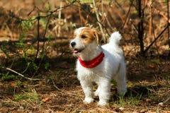 Paisaje del otoño con un perro blanco en el parque Foto de archivo libre de regalías