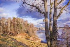 Paisaje del otoño con un tronco de árbol y una pajarera Imagen de archivo libre de regalías