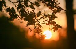 Paisaje del otoño de hojas en la puesta del sol Postal hermosa, backgr fotografía de archivo
