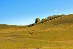 paisaje del otoño de la ladera Imagenes de archivo